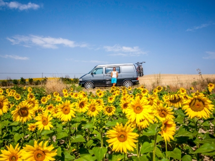 Sunflowers, the T4 and me, La Rioja