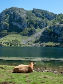 The lake and the cow, Asturias