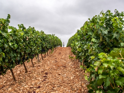 Wineyards in La Rioja