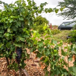 Walking around the wineyards, La Rioja