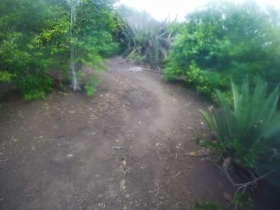 Iguana, running away from us